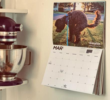 This Calendar Features Amazing Photographs Of Dogs Pooping On Majestic Sceneries