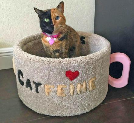 This Catfeine Coffee Mug Cat Bed Is a Must For Coffee Loving Cat Owners