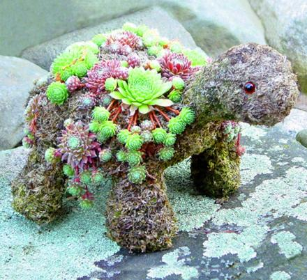 This DIY Kit Lets You Grow an Adorable Turtle Made From Succulent Plants