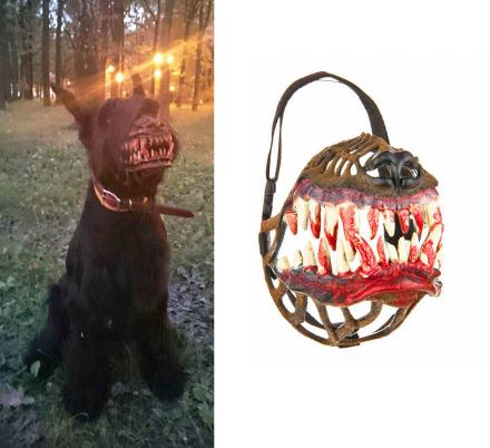 This Dog Muzzle Makes Your Dog Look Like a Werewolf