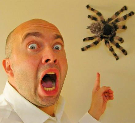 This Fake Tarantula Makes For The Perfect Prank Or Halloween Decor