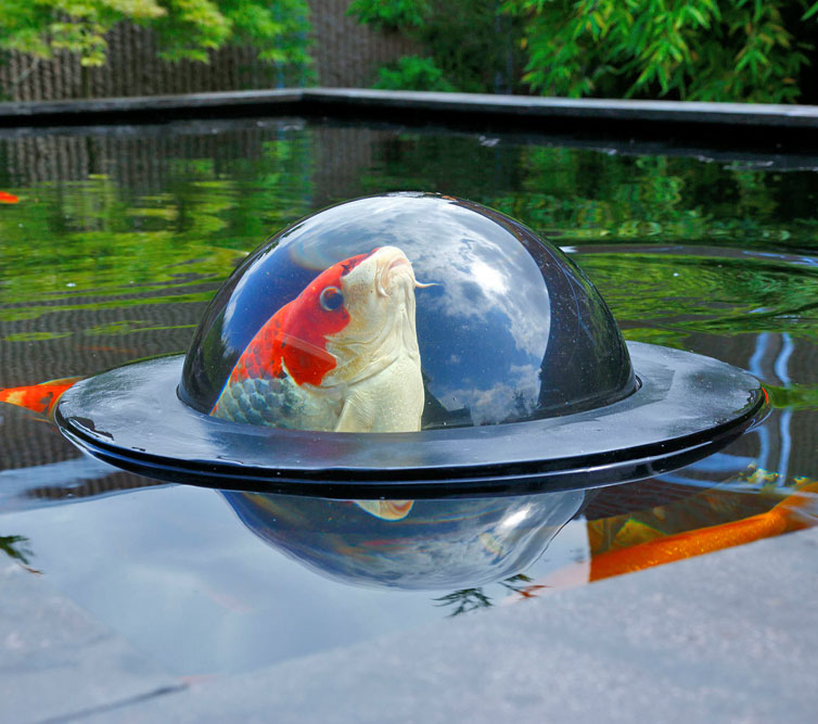 This fish dome keeps a bubble of water above the water for Koi pond bubble