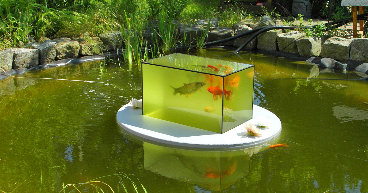 This Floating Fish Observatory Lets You View Your Fish Above The Water Line