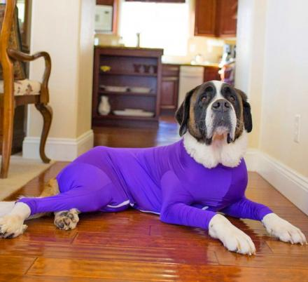 This Genius Dog Onesie Keeps Your Pooch From Shedding All Over Your Home