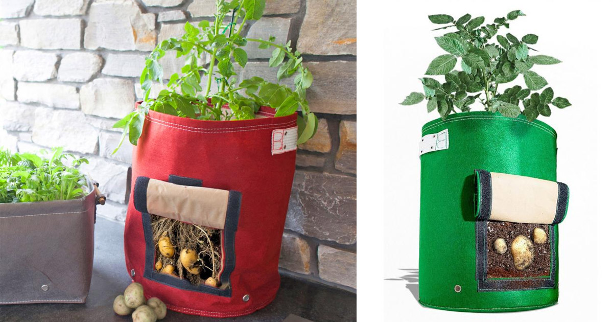 Genius Urban Potato Planter Doesn