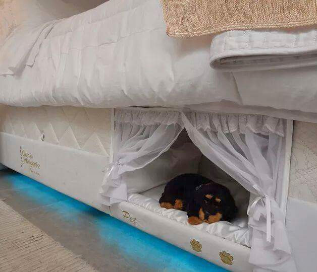 Wait -- shouldn't the other bowl say FOOD and not DOG? And is that dog's  name Pet? This is the bed frame with an integrated pet bed designed by  Brazilian ...