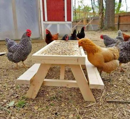This Mini Picnic Table For Chickens Lets Your Fowl Feed With a Little Bit Of Dignity