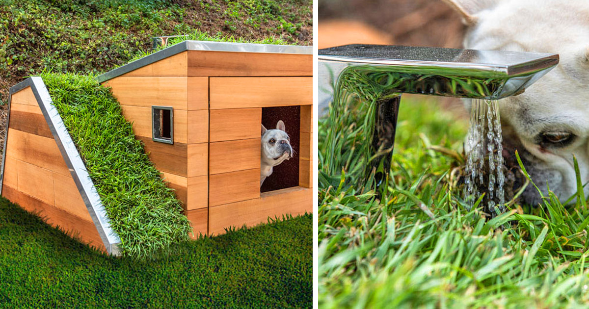 This Modern Dog House Is Made With Grass Ramp, and An Automatic Water Faucet On Top