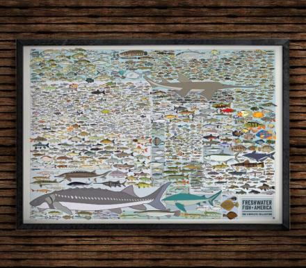 This Fish Poster Features Every Freshwater Fish In America