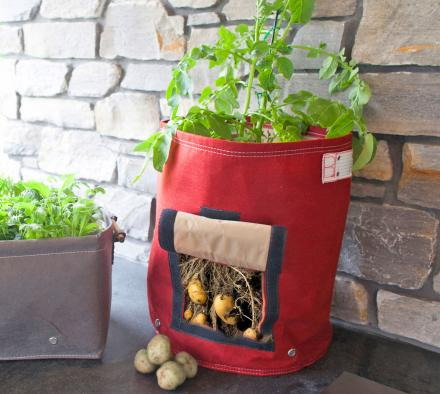 Genius Urban Potato Planter Doesn't Require You To Pull Plant To Gather Potatoes