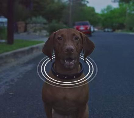 This Smart Dog Collar Has a Built In GPS And Helps You Train Your Dog