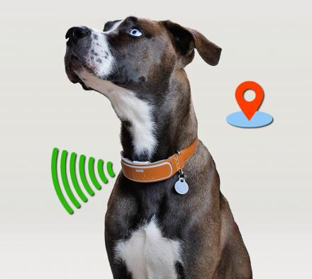 This Smart Dog Collar Has GPS Tracking and an Activity Monitor