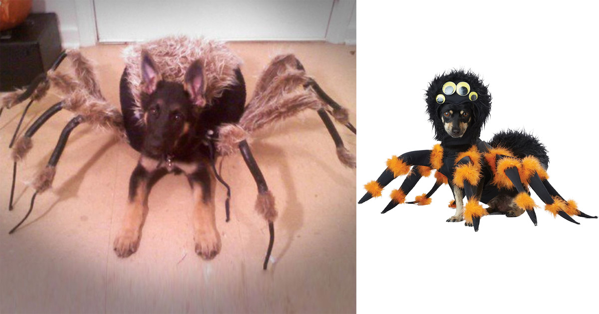 This Tarantula Dog Costume Turns Your Pooch Into a Giant Spider For Halloween