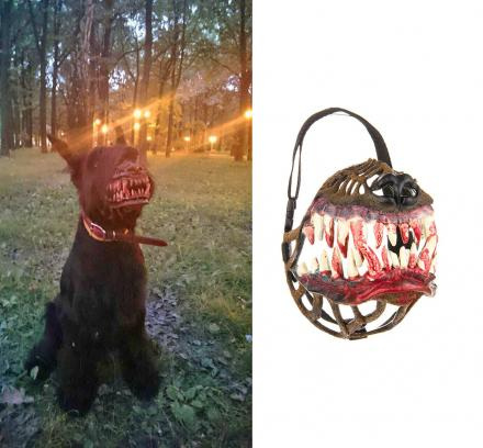 This Werewolf Muzzle Might Be The Coolest Halloween Costume For Your Dog Ever!