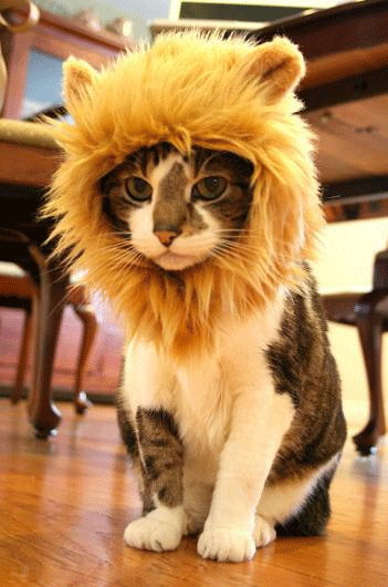 Lion's Mane Cat Hat