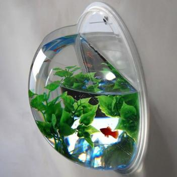 Wall Mounted Aquarium Bowl