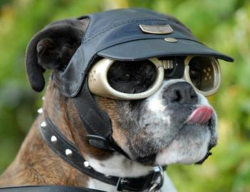Doggles - Dog Sunglasses