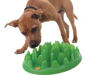 Green Interactive Pet Feeder