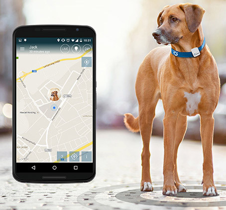 Tractive Gps Dog Tracker Lets You Track Your Dog Via Your
