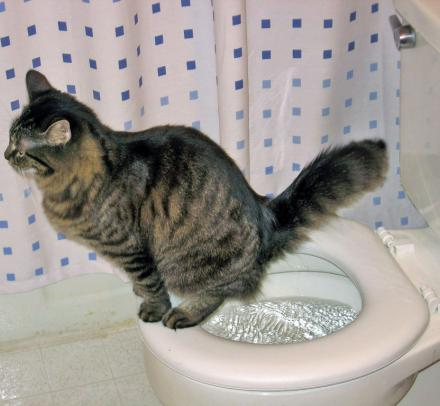 Train Your Cat To Pee In The Toilet