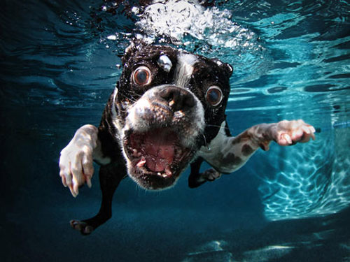 Underwater Dogs Book 1