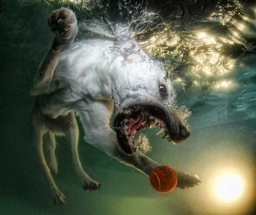 Underwater Dogs Book 6