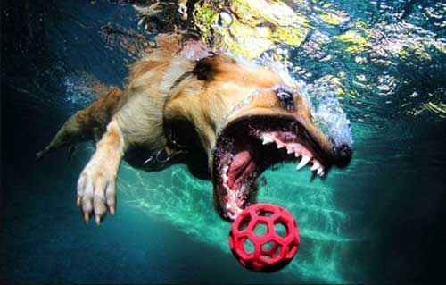 Underwater Dogs Book 7