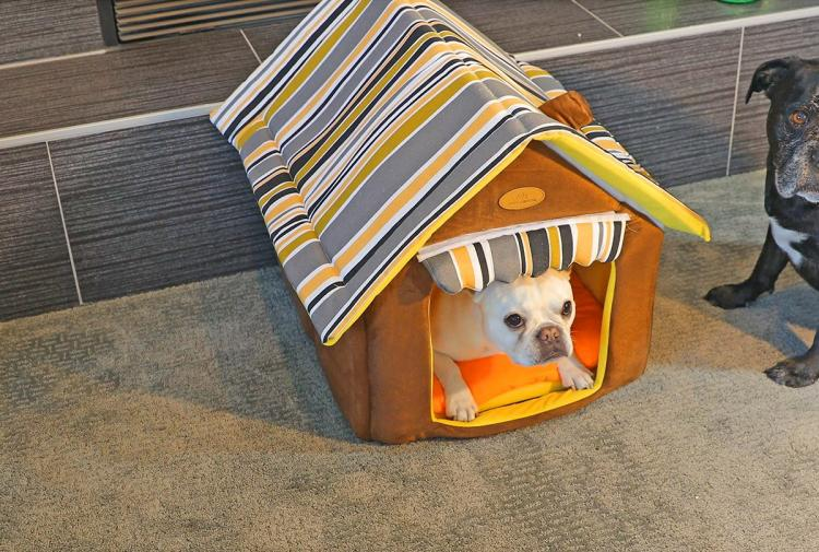 Cabin Shaped Comfy Indoor Dog House