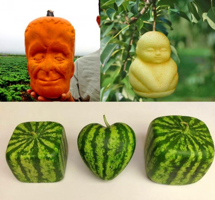 Fruit Molds Let You Grow Fun Shaped Watermelons and Pumpkins