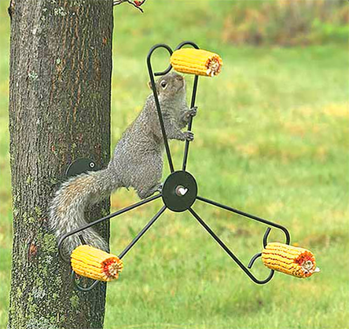 BONUS: Spinning Squirrel Feeder