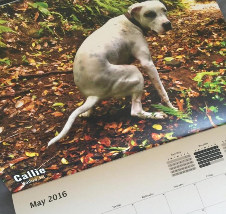 Pooping Dogs Calendar 2018