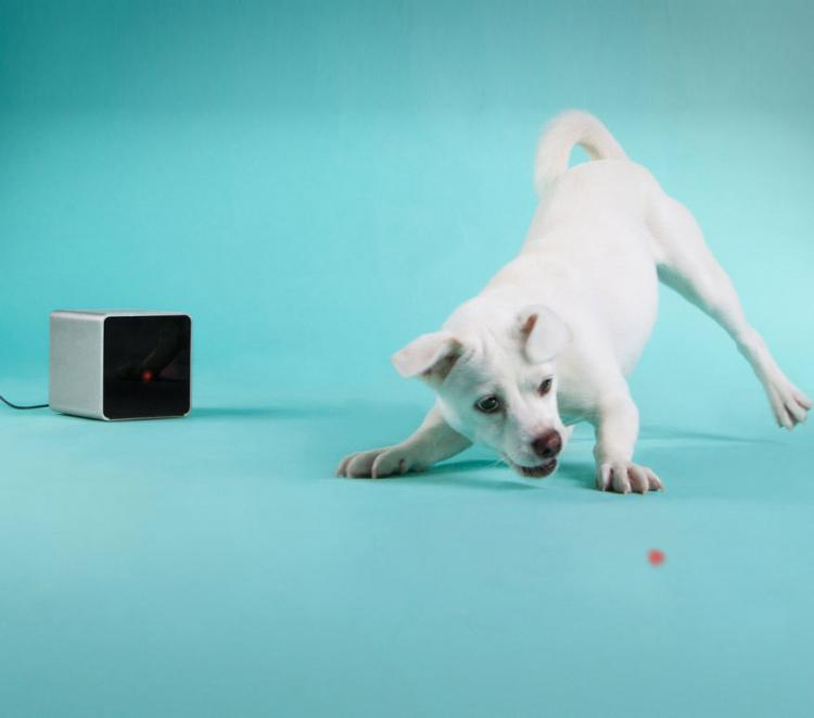 PetCube: Play With Your Pet From Your Phone