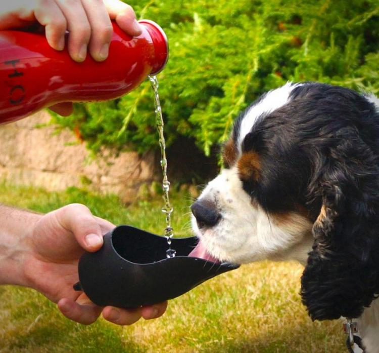 Travel Water Bottle For Dogs That Uses The Cap As The Bowl