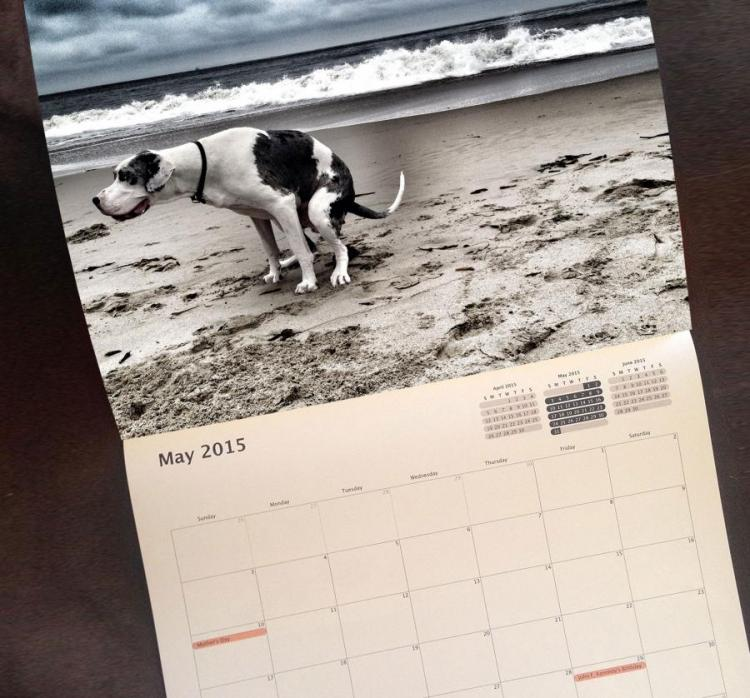Pooping Dogs Calendar