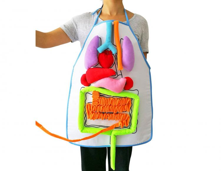 Anatomy Kids Apron Educates Children On Body Organs - Body organ teaching velco apron