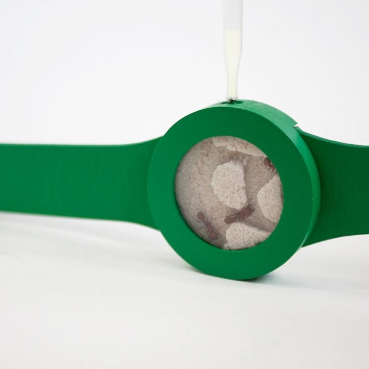 Ant Watch - Wrist Watch With Live Ants