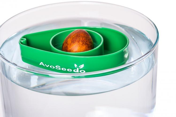 AvoSeedo - Grow Your Own Avocado Tree Using an Avocado Seed