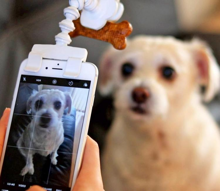 Flexy Paw Treat Holder Attaches To Your Phone For Perfect Pictures of Your Dog