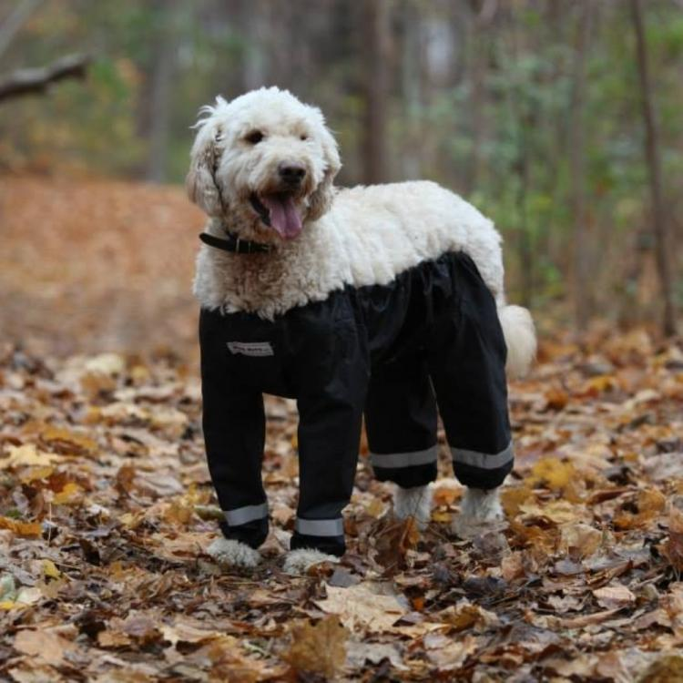 Bottom Half Dog Pants - Dog Raincoat
