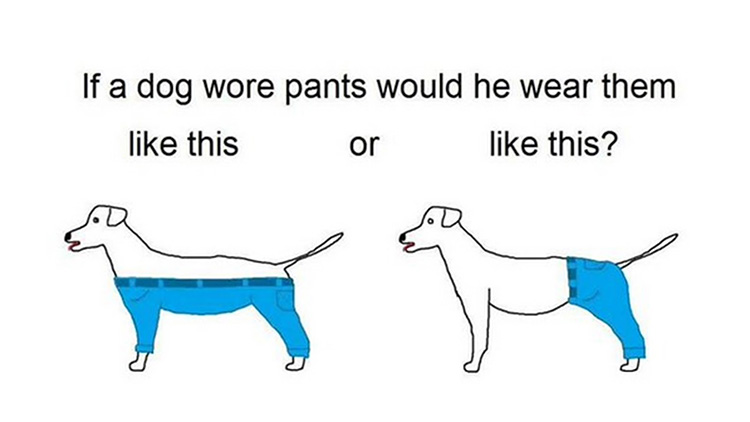 Dog pants meme