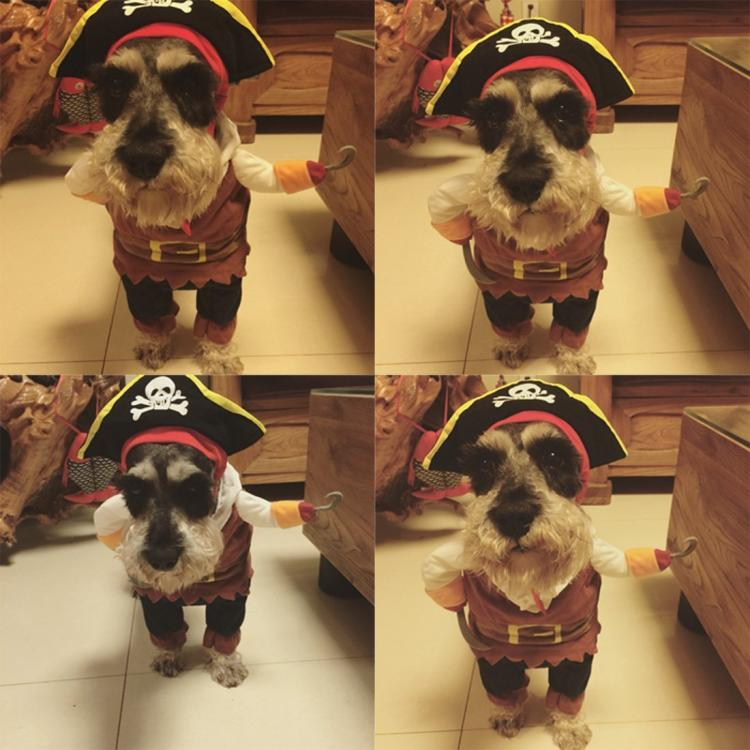 Dog Pirate Costume