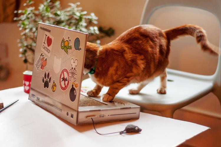 Cat Scratch Laptop - Toy Laptop For Cats
