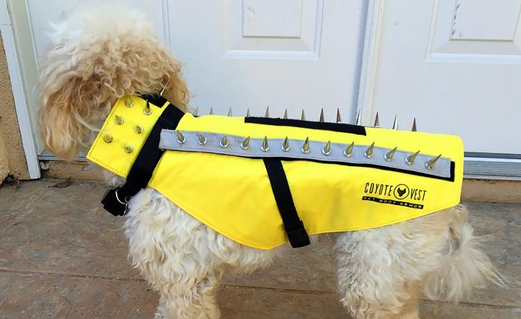 Coyote Vest: Spiked Dog Harness Protects Against Coyotes and Birds of Prey