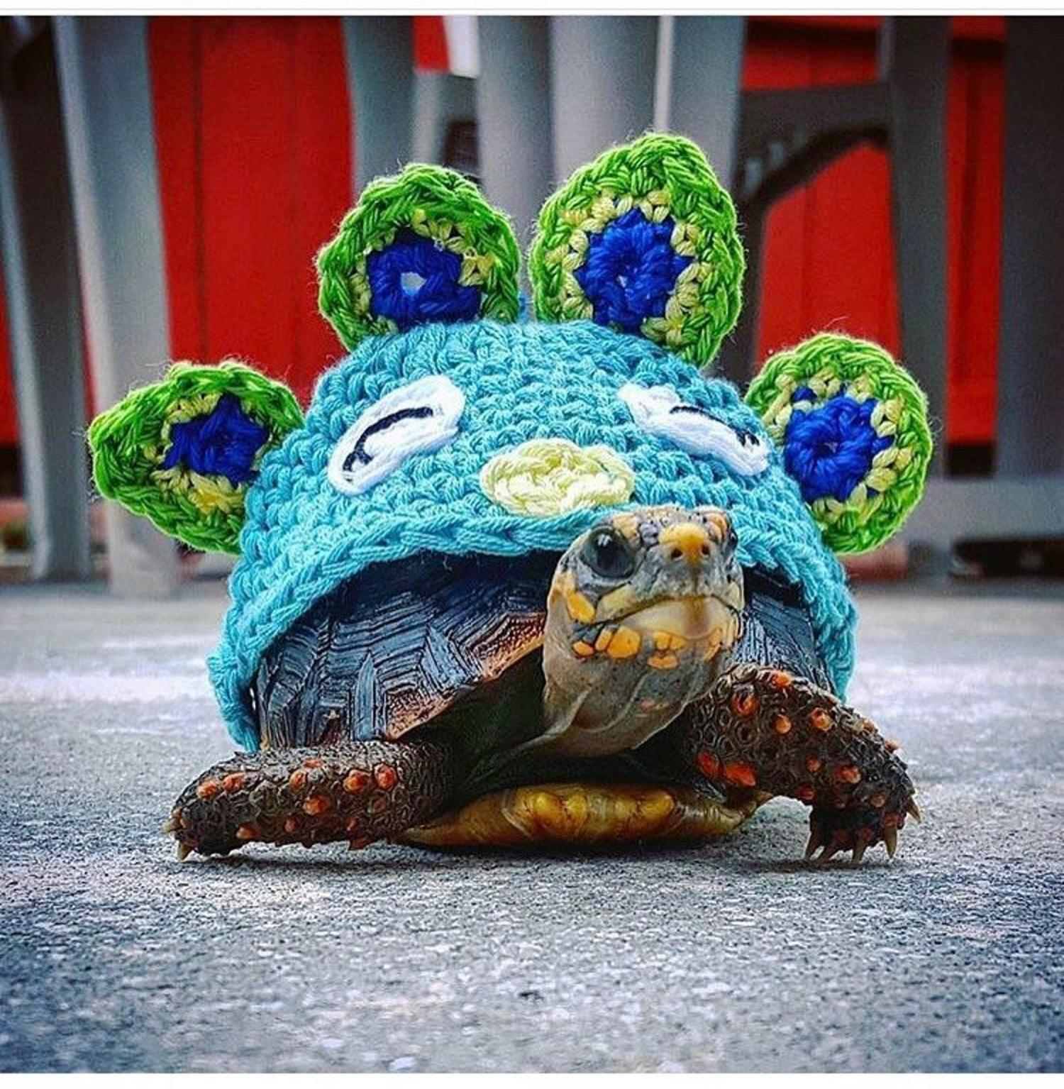 Crochet Turtle Sweater - Peacock tortoise cozy