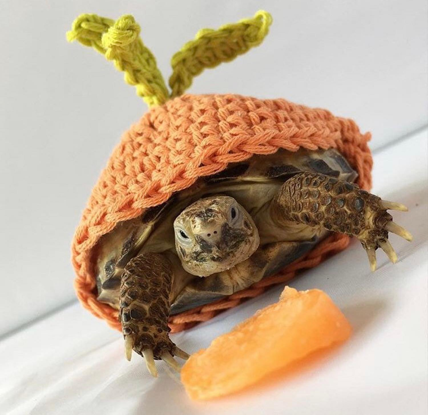 Crochet Turtle Sweater - Carrot tortoise cozy