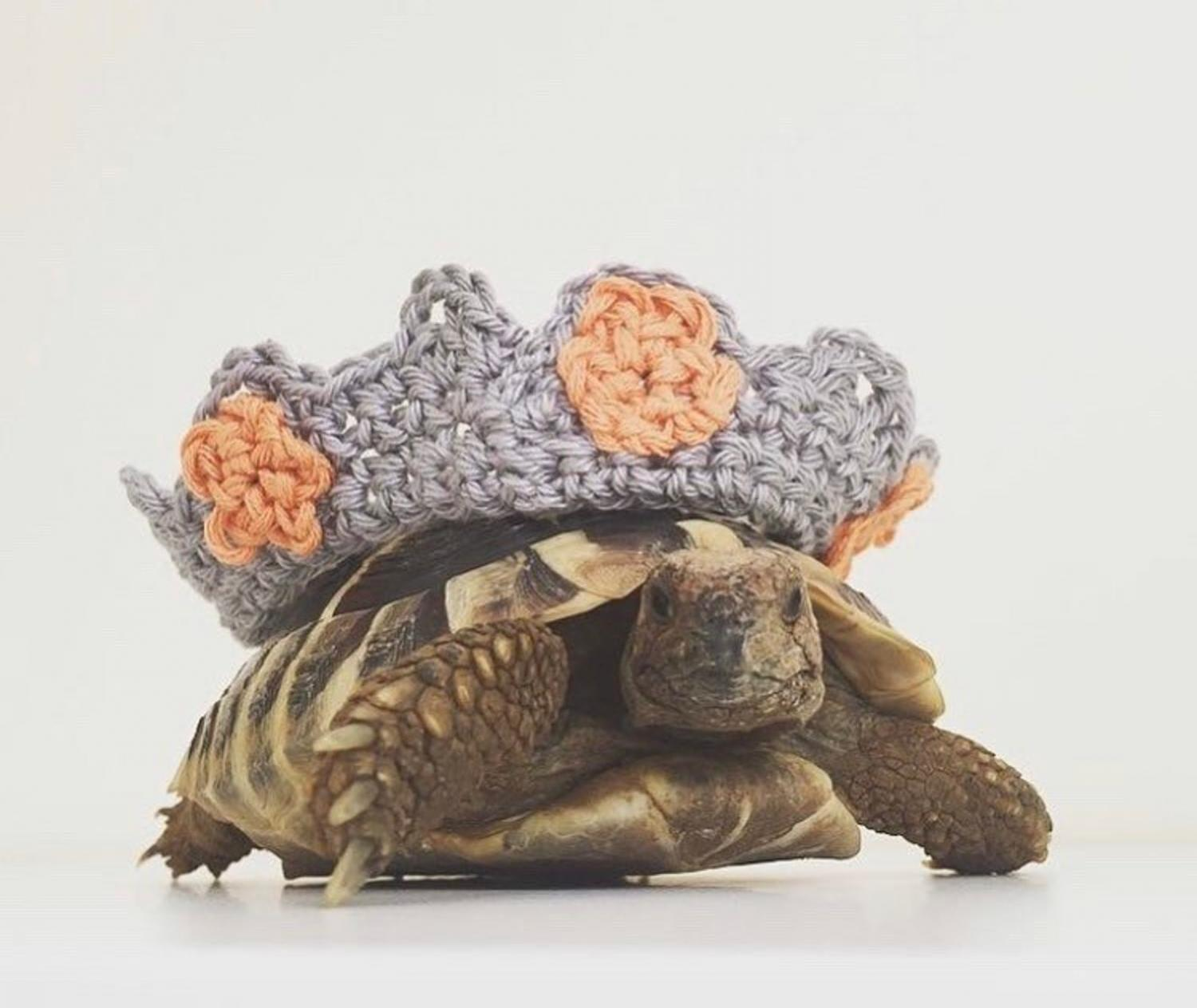 Crochet Turtle Sweater - Crown tortoise cozy