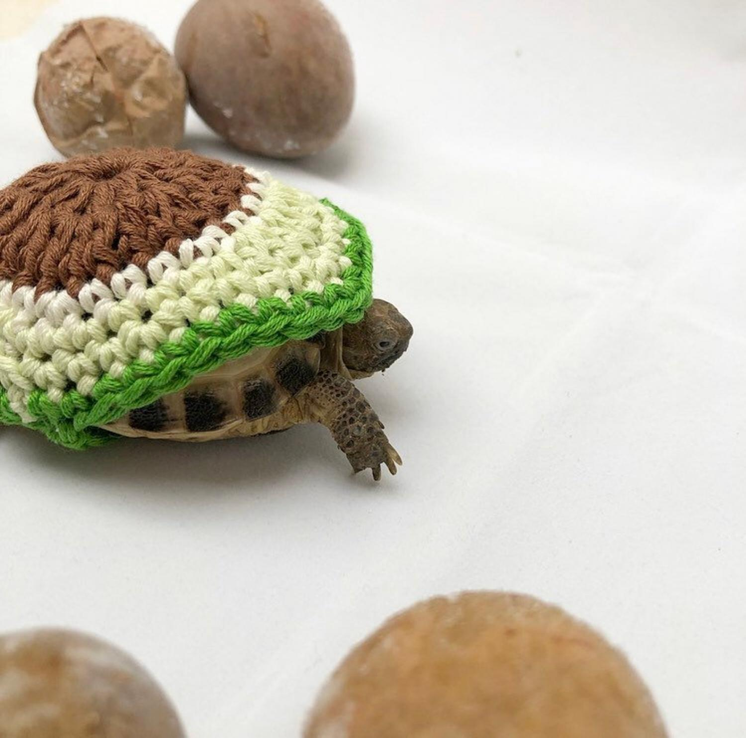 Crochet Turtle Sweater - Avocado tortoise cozy