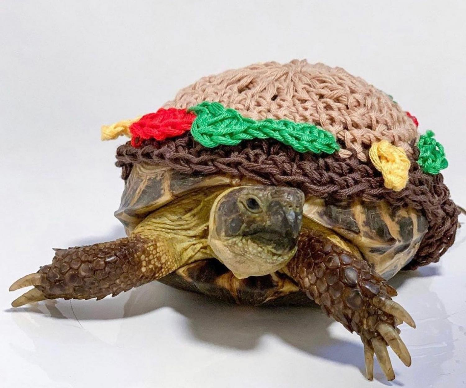Crochet Turtle Sweater - Cheeseburger tortoise cozy