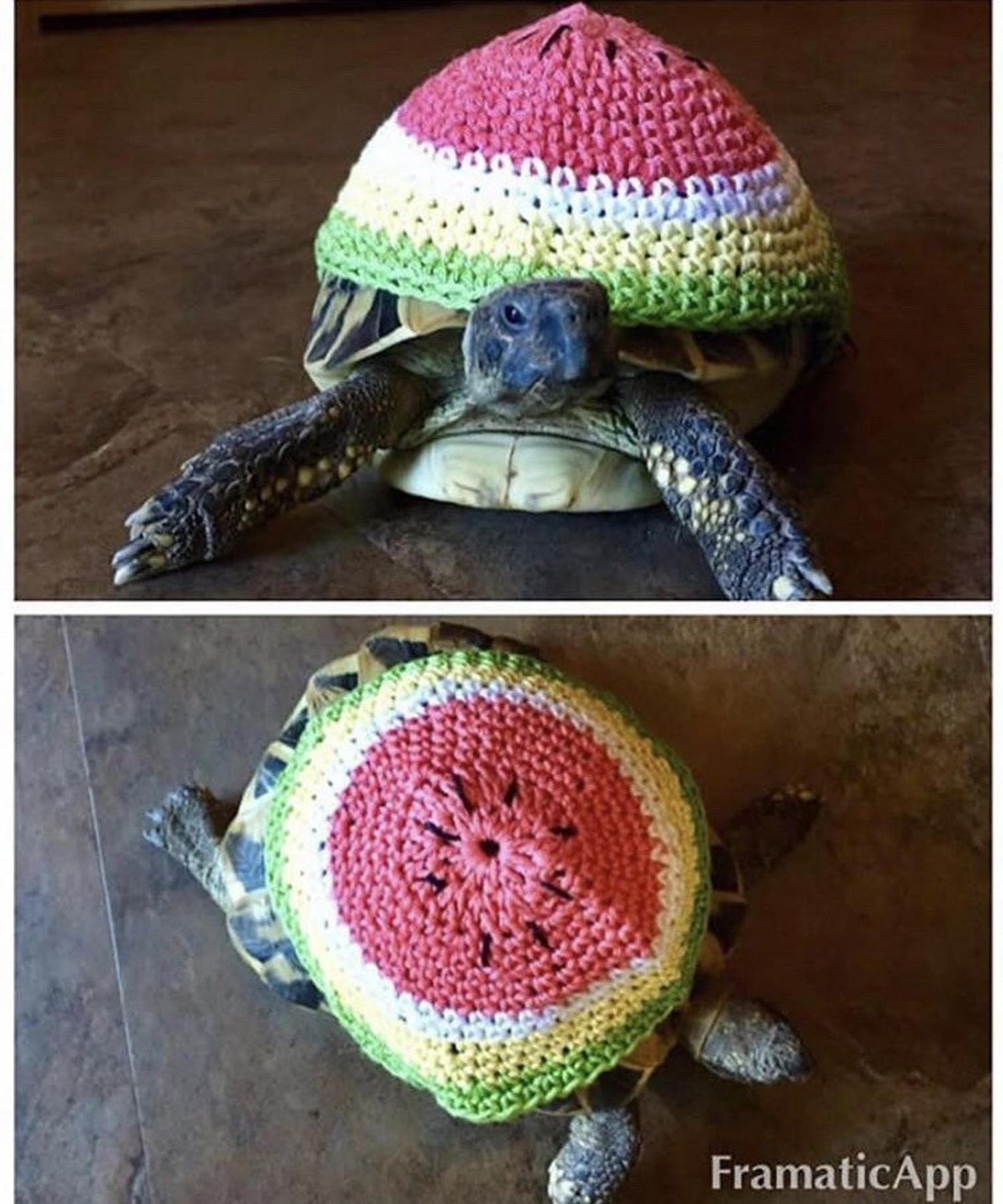 Crochet Turtle Sweater - Watermelon tortoise cozy