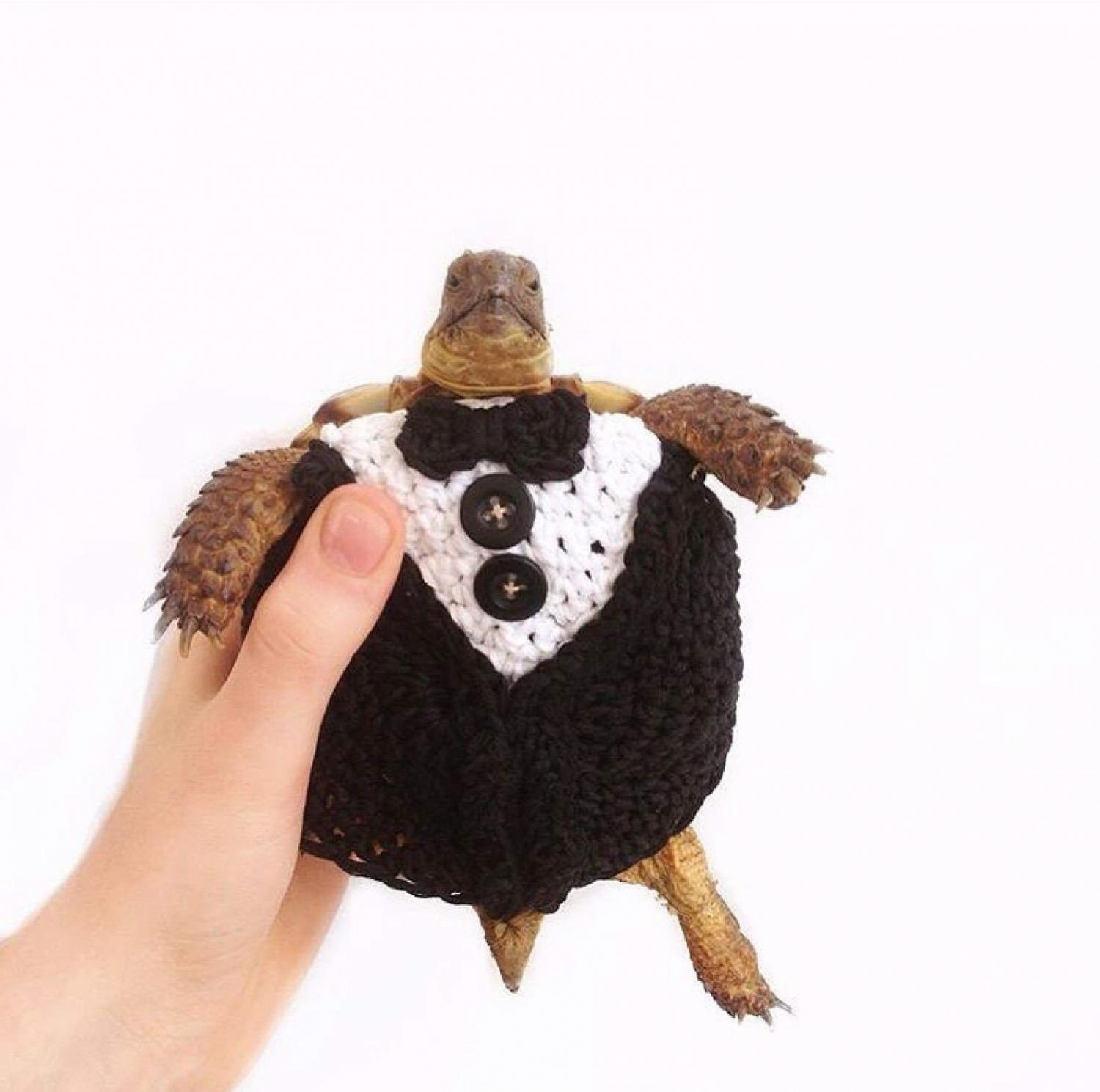Crochet Turtle Sweater - Tuxedeo tortoise cozy
